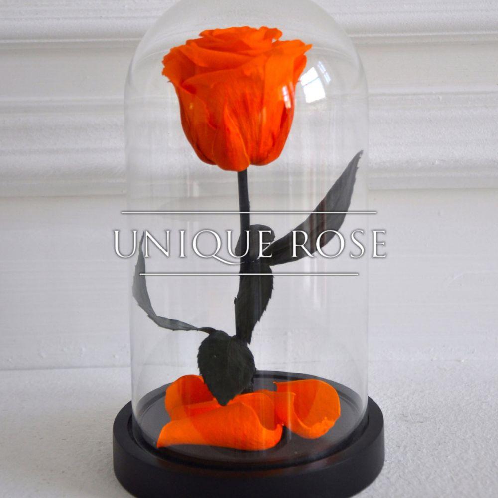 Розы в колбе купить в Москве