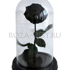 BLACK STAR ЧЕРНАЯ РОЗА В КОЛБЕ PREMIUM