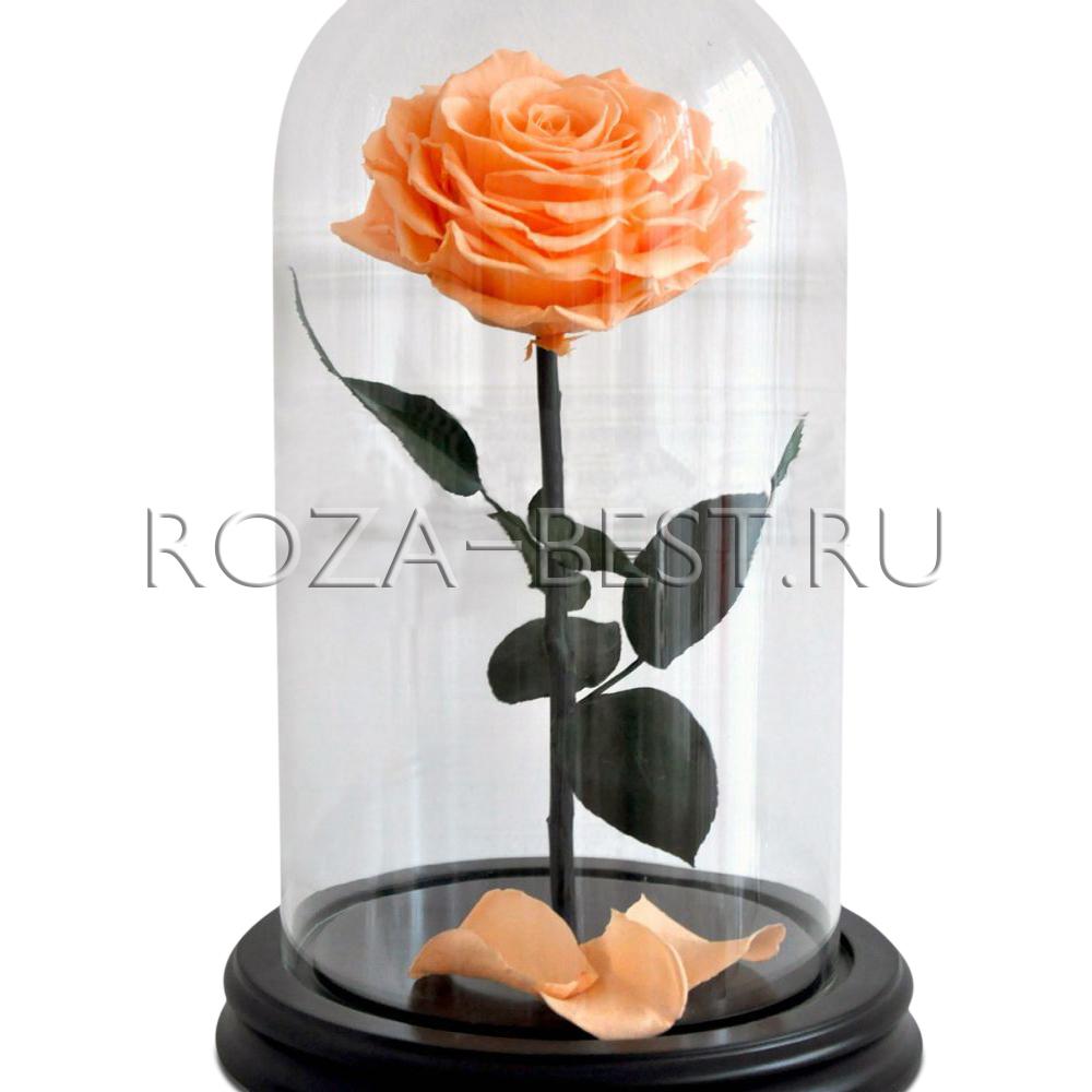 Розы в колбе разных видов, купить по низкой цене в Москве