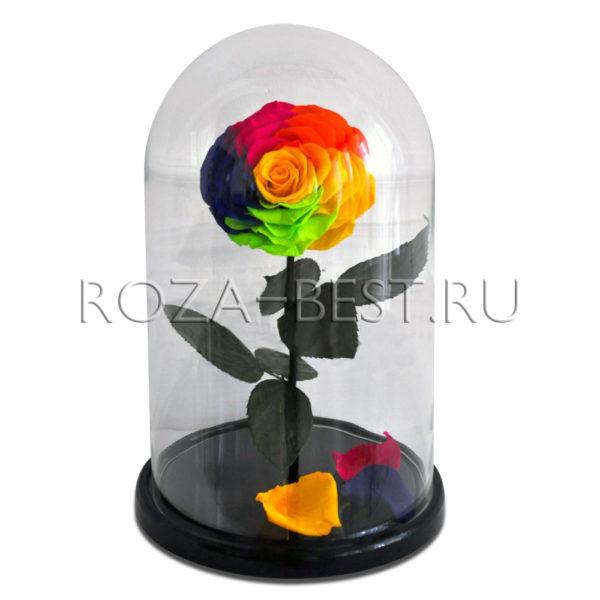 RAINBOW РАЗНОЦВЕТНАЯ РОЗА В КОЛБЕ KING SIZE