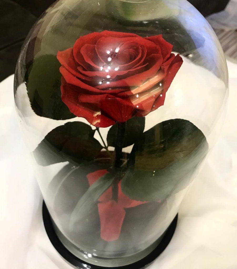 roza-v-kolbe2