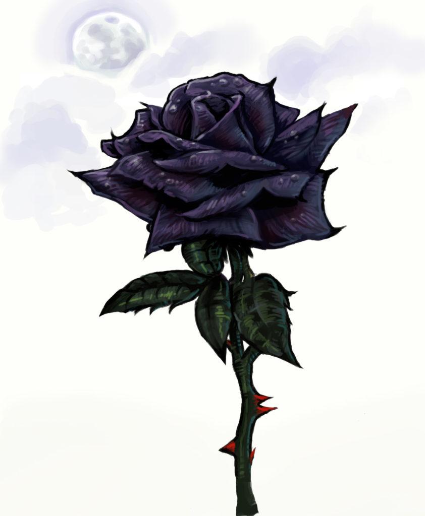 chernaya-roza
