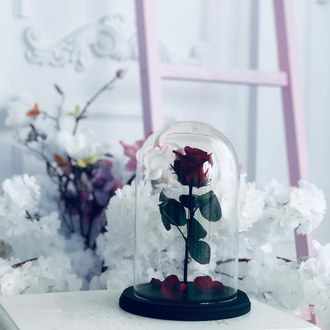 roza-v-kolbe-krasnaya-na-belom-fone